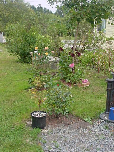 My Garden September 16 2005