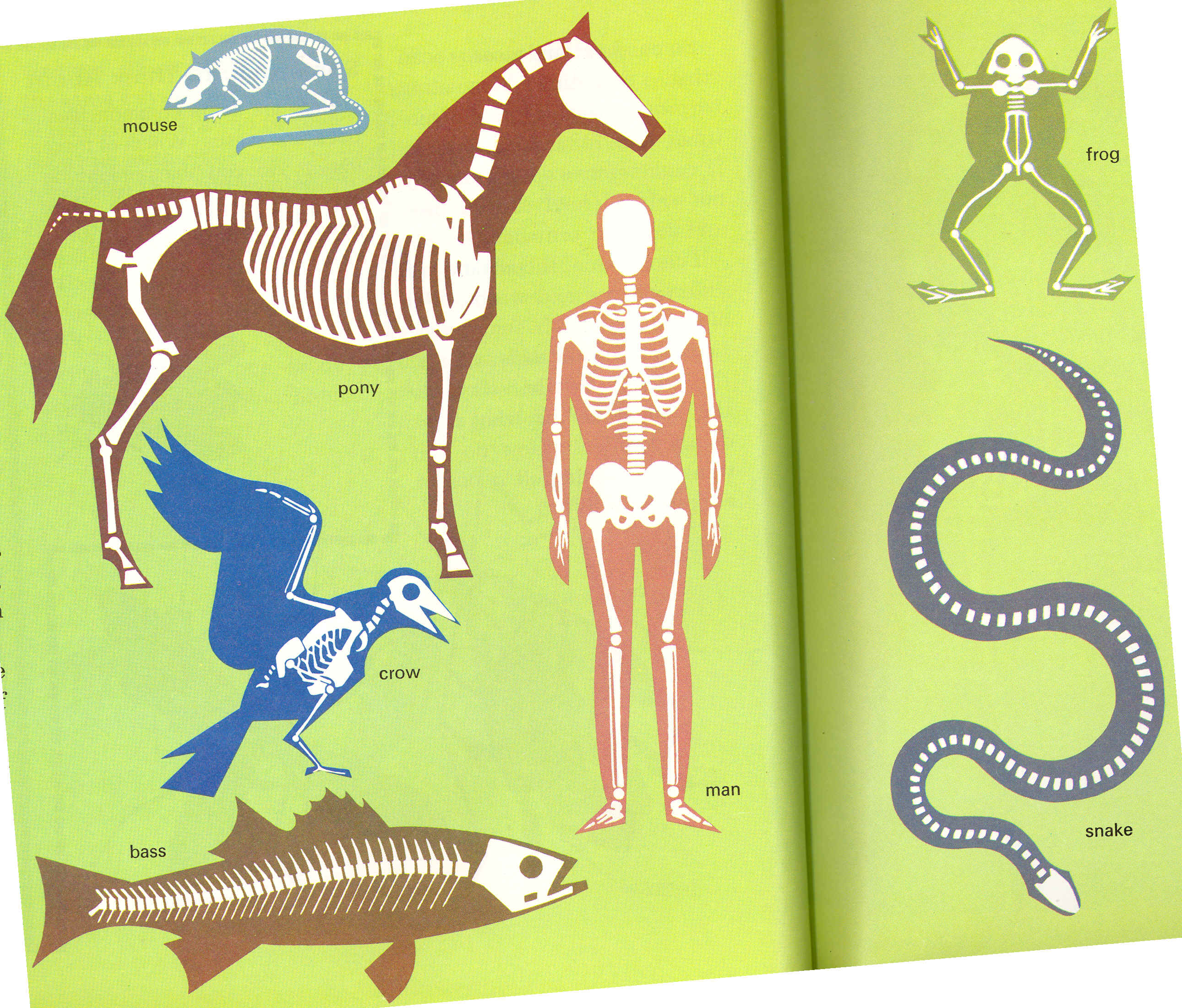 Vertebrates Outlines With Backbones